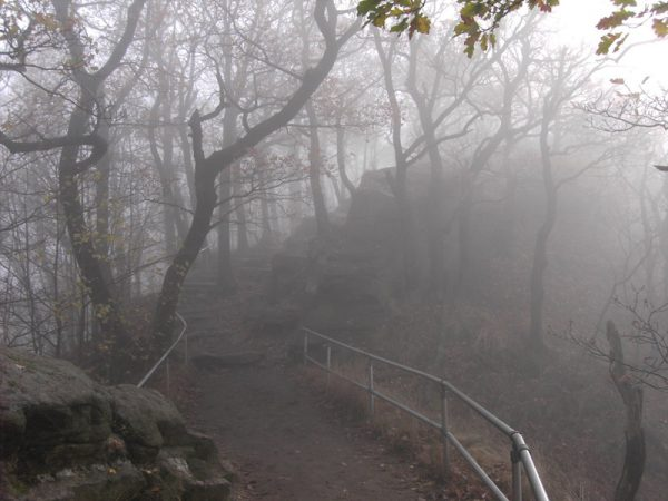 Verwunschener weg im Nebel